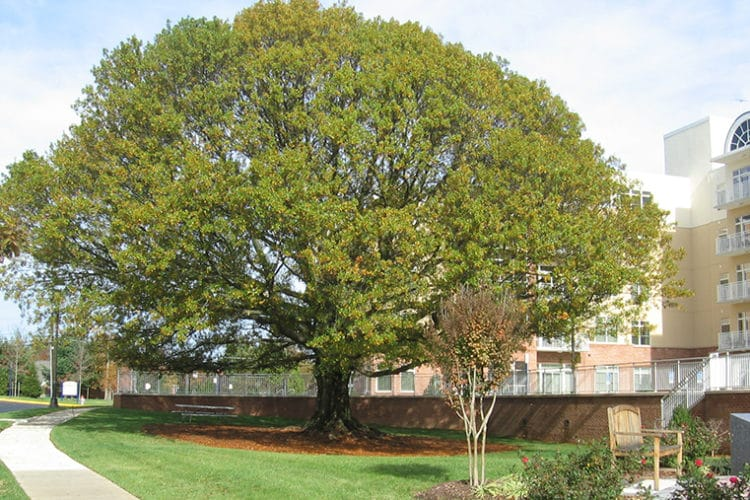 Fairfax Adopts Action Plan to Preserve, Enhance County's Tree Canopy